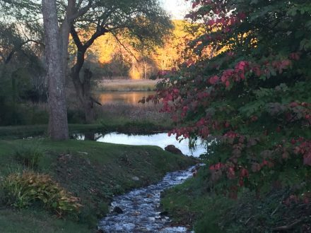 sunset and red leaves by a stream